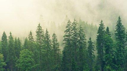 Неутешительная тенденция: изменение климата плохо влияет на деревья