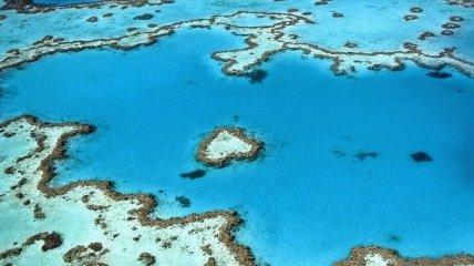Невозможное возможно: кораллы научились восстанавливаться