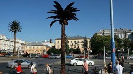 Пальма из шоколада установлена в Варшаве