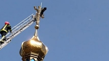 В Хмельницкой области аист чудом выжил после столкновения с церковным крестом (видео)
