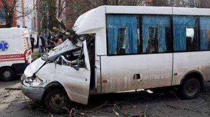 В Николаеве дерево упало на маршрутку, пострадали дети