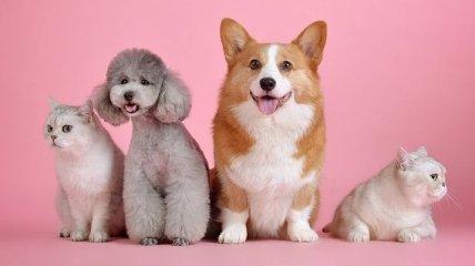 Найдите отличия: фотоснимки, которые доказывают, что собаки похожи на хозяина