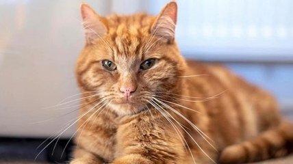 Сидел на пороге и плакал: Кот спустя полтора месяца вернулся домой
