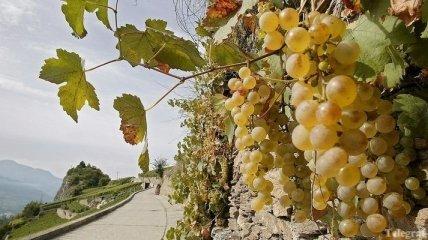 Фестиваль вина пройдет в Будапеште