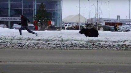 Пришлось начать утро с пробежки: в России медведь устроил погоню за людьми посреди горда (видео)