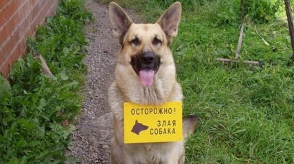 """Прикольные и веселые таблички """"Осторожно злая собака"""""""