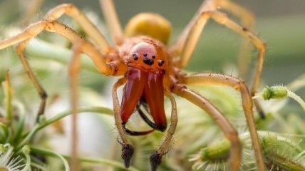 Под Киевом дачника укусил один из опаснейших в мире пауков