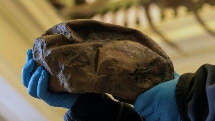 Никто не мог предположить: раскрыта тайна странной антарктической окаменелости (Фото)