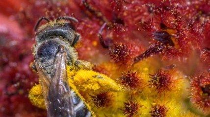 Пыльца и сладкий нектар: Как происходит опыление насекомыми (Фото)
