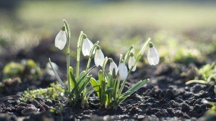 Будет сухо, но погода ухудшится: синоптик озвучила прогноз погоды в Украине на 11 и 12 марта