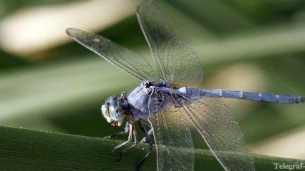 Самые быстрые насекомые в мире
