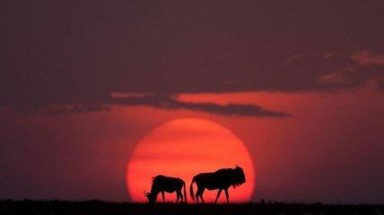 Невероятная Африка: завораживающие закаты от Пола Гольдштейна (Фото)