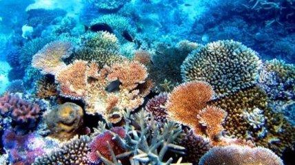 Обнаружены бактерии, способные спасти коралловые рифы