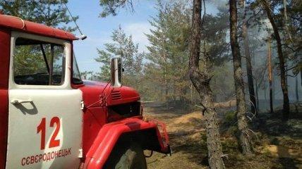 На Луганщине снова произошел лесной пожар