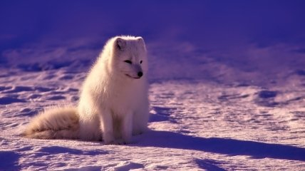 """""""Это может произойти в любой момент"""": исследователь дал прогноз по таянию льдов Арктики"""