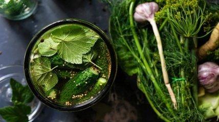 Получаются вкусными и хрустящими: топ-3 рецепта маринованных огурцов