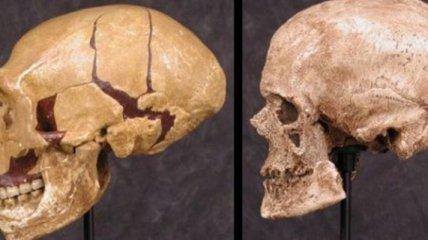 Антропологи воссоздали внешность кроманьонца по его черепу
