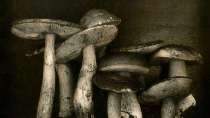 Необычный взгляд Ингара Краусса: изумительные натюрморты (Фото)