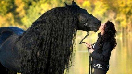 Фредерик Великий - самый красивый конь в мире, чья роскошная грива сводит людей с ума (Фото)