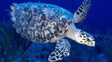 Гигантская черепаха бисса отложила яйца в клинике США