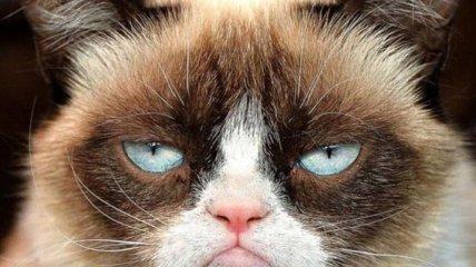 В Киеве задержали рейс в Анкару из-за кота
