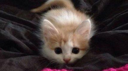 Почему коты такие коты: подборка милых фото домашних любимцев