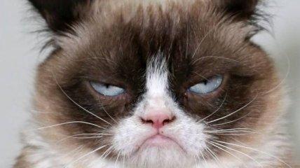 Ученые: популярность вредит кошкам