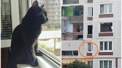 После взрыва в многоэтажке Ногинска оставили животных