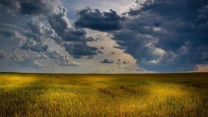 Рынок земли: что думают украинцы