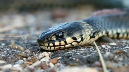 На Львовщине от укусов змей пострадали женщина и ребенок