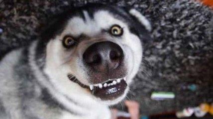 Можно лопнуть со смеху: смешные фото домашних любимцев