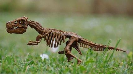 Была в положении: археологи нашли останки беременной самки динозавра