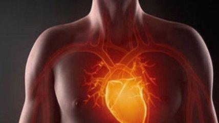 Целебные травы, которые помогут при болезнях сердечно-сосудистой системы