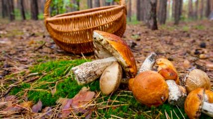 Наступил грибной сезон