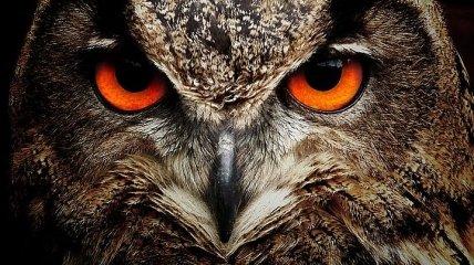 Самые опасные птицы на планете (Фото)