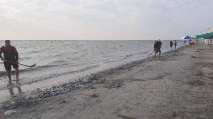 Нашествие медуз на пляжи Азовского моря: что сейчас происходит на украинских курортах (фото, видео)