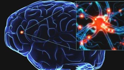 Ученые установили, что мозг человека был образован благодаря гену