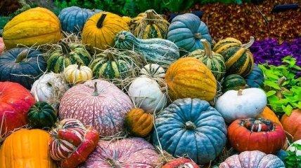 Дельные советы: как лучше всего хранить овощи и фрукты в погребе (Фото)