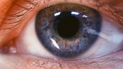 """Когда зрение начинает """"барахлить"""": лучшие продукты для зорких глаз (Фото)"""