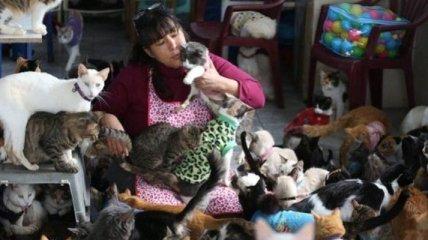 Медсестра сделала из своего дома приют для кошек (Фото)