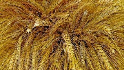 Аграрный фонд намерен реализовать запасы интервенционного фонда