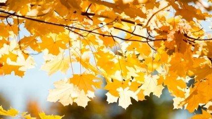 Погода в Украине 1 октября: в основном ясно, без осадков