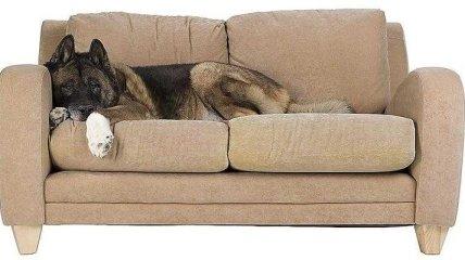Почему стоит остерегаться диванов?