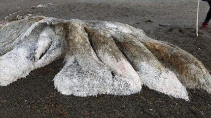 На побережье Камчатки нашли неизвестное существо