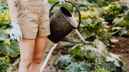 Лунный календарь огородника и садовода