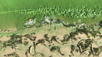 Дніпро повністю забруднене водоростями.