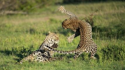 Южная Африка - земля леопардов