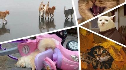 Картинки и мемы с котами