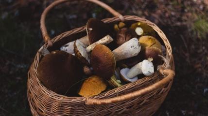 Старые грибы, а также очень червивые лучше сразу выбрасывать