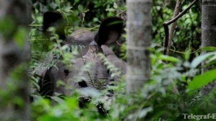 Сегодня - Всемирный день охраны мест обитания